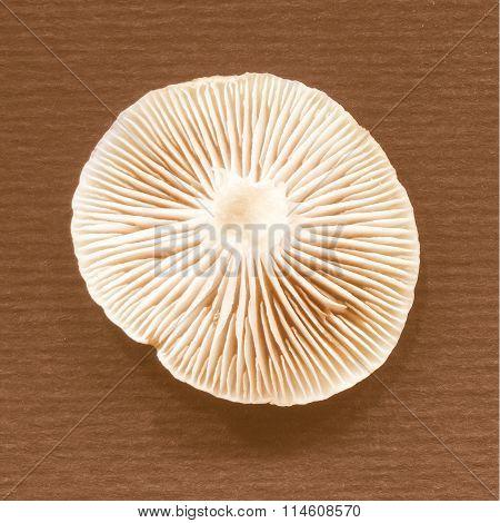 Retro Looking Mushroom