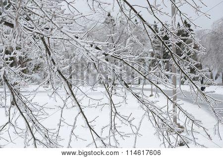 Frozen Winter Background