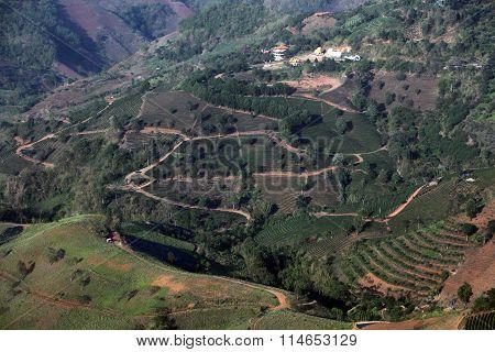 Asia Thailand Chiang Rai Mae Salong Tea Plantation
