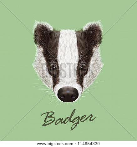 Badger Portrait. Vector Illustrated