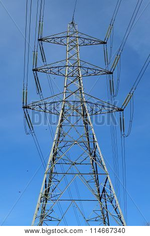 Transmission tower and starlings