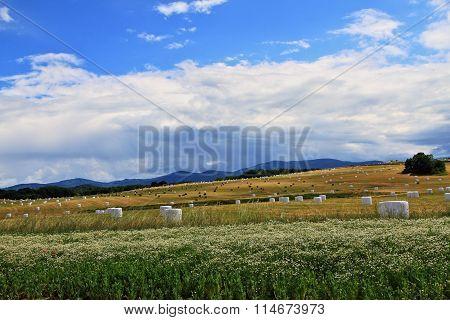 Czech Autumn Field