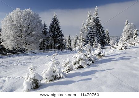 Beautiful Winter Landscape With Snowy Trees In Alps
