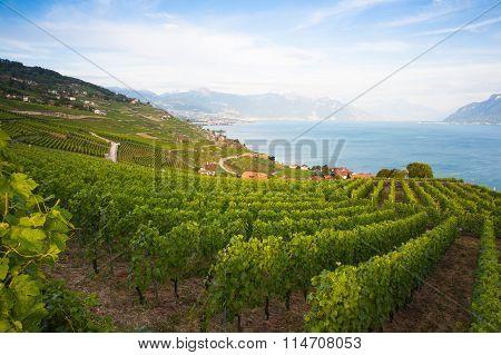 Vineyards Of The Lavaux Region,switzerland