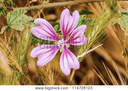 Flower Among The Wheat