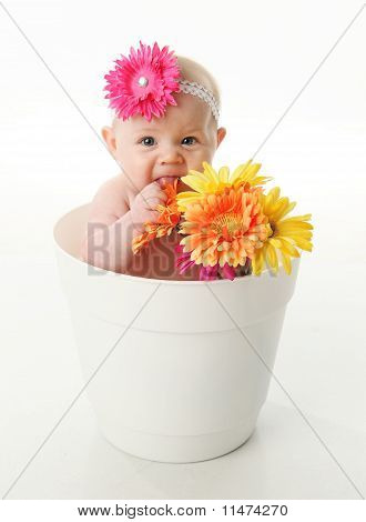 Funny Baby Girl In A Flower Pot Eating Daisies