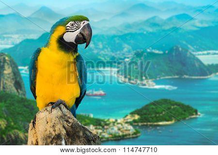 Blue and Yellow Macaw in Rio de Janeiro, Brazil