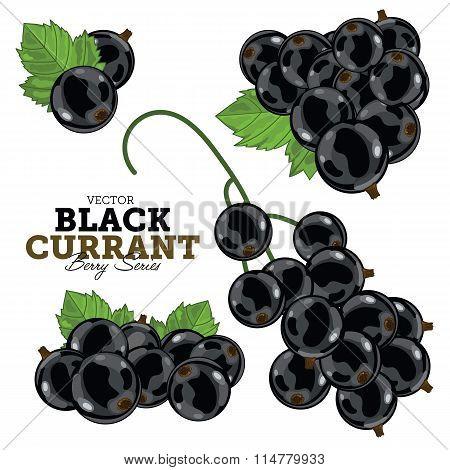 Black Currant Set, Vector.