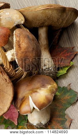 Raw Forest Mushrooms