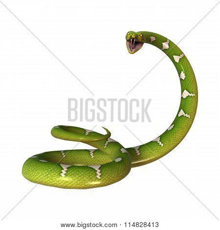 Green Tree Python On White