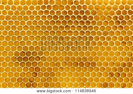 Beeswax Honeycomb Foundation Close Up
