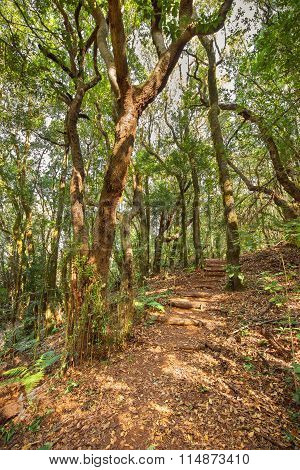 Rain forest in Garajonay national park La Gomera Canary island Spain.
