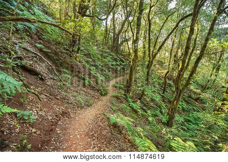Rain forest in Garajonay national park La Gomera Canary islands Spain.