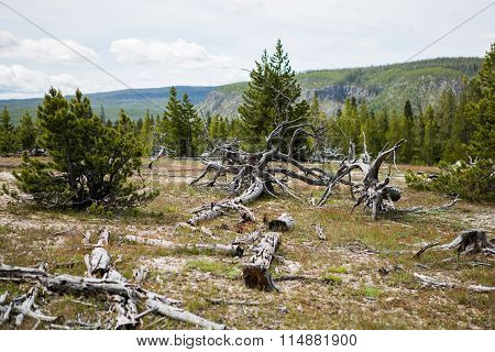 Isolated Dead Tree With No Leaf On Cracked Soil As A Result From Global Warming Effect