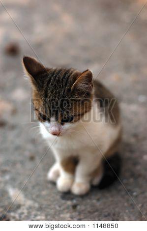 small kitty sitting on a street. nostalgic. poster