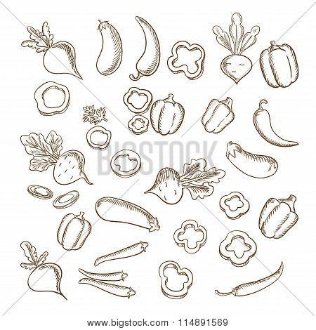 Sketch of fresh farm vegetarian vegetables