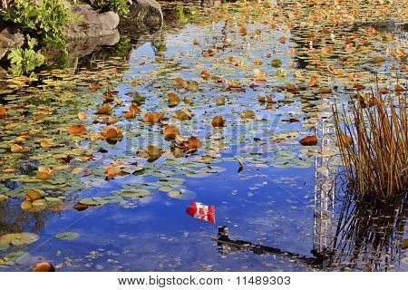 Lily Pads Canadian Flag Fall Colors Leaves Reflection Van Dusen Gardens Vancouver British Columbia Canada poster