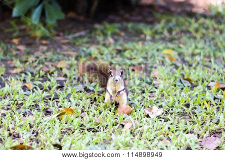 Squirrel Fur Funny Pets Autumn Forest