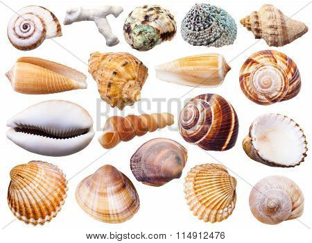 Set Of Various Mollusk Shells