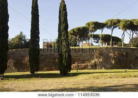 Palatine Hill From Via Di San Gregorio In Rome