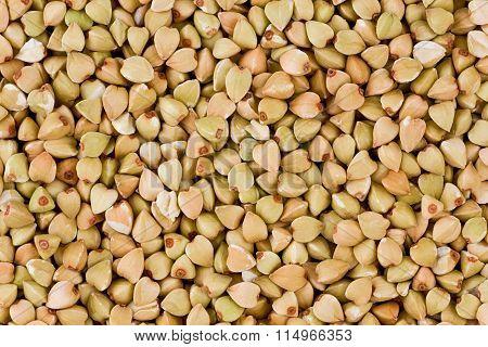 Buckwheat (fagopyrum Esculentum)