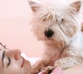 Westie sleeping next to woman in bed . poster