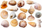 set of different mollusk shells isolated on white background poster
