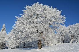 Snow Tree Under Blue Sky