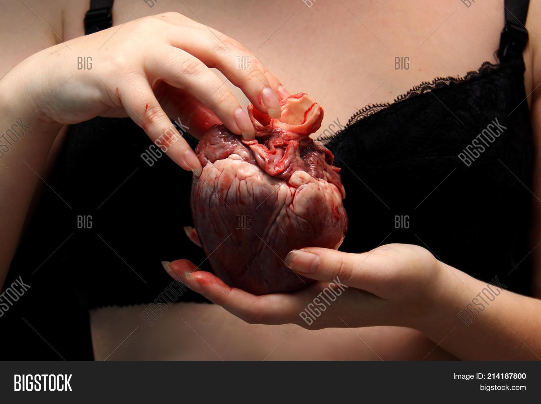 Real Human Heart Image Photo Free Trial Bigstock