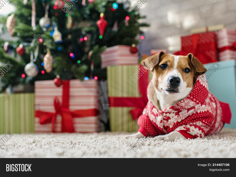 merry christmas dog image photo free trial bigstock merry christmas dog image photo