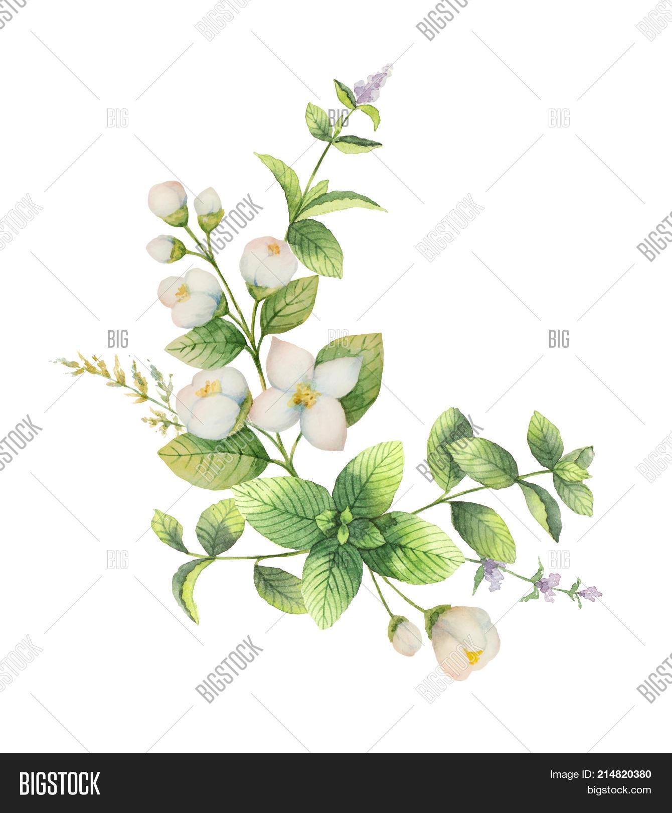 Watercolor Wreath Image Photo Free Trial Bigstock