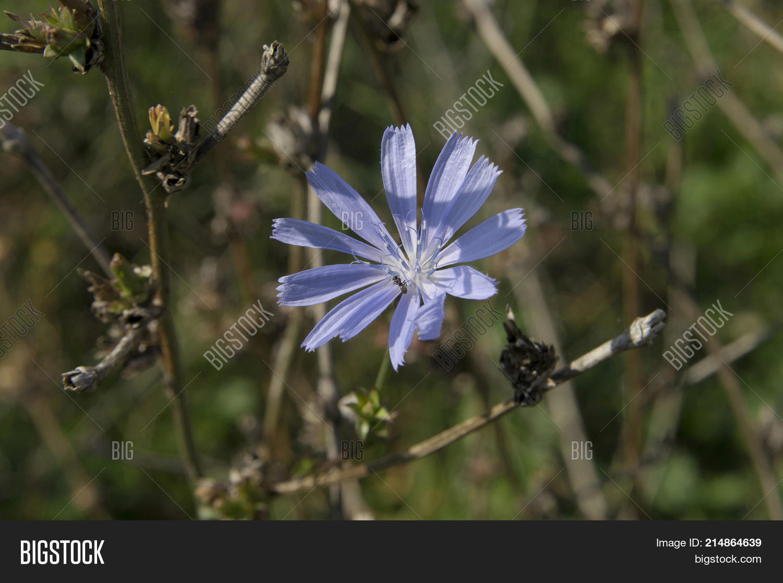 Blue Flower Meadow Image Photo Free Trial Bigstock