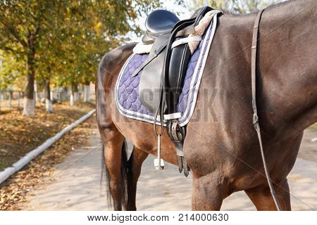 Torso of a beautiful brown horse with a fixed saddle on its back. Outdoors.