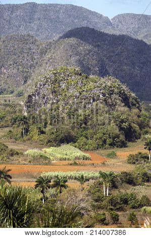 Cuba. Tropical nature of Vinales Valley,landscape in sunny day