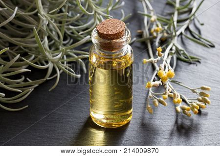 A Bottle Of Helichrysum Essential Oil With Blooming Helichrysum On A Gray Background