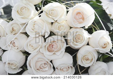 Bouquet Of Cream Roses. Cream Roses Putting Together Many Of Flowers. Floral Abstract Background For
