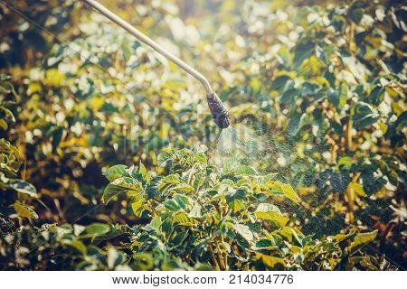 Spraying Potato Plants