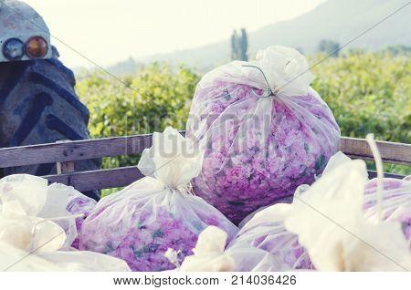 Rose Picking Truck Plastic Bag Agronomy Pink