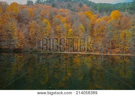 Forest. Green mountain forest landscape. Misty mountain forest. Fantastic forest landscape. Mountain forest in clouds landscape. Foggy forest. Mountain forest landscape. Dark forest in haze landscape.autumn, tree, park, yellow, season, forest, outdoor, na