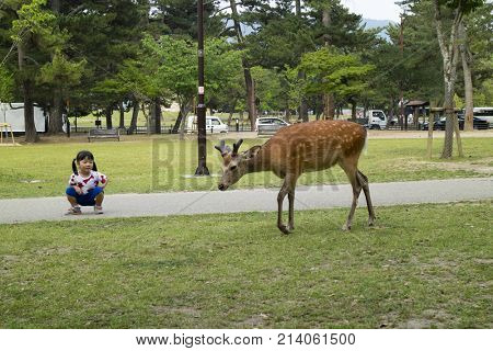 Nara - Japan, May 30, 2017: Litle girl is looking at a deer that wonders freely in the park at the Kasuga Taisha shrine
