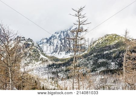 Spruce forest after natural disaster in High Tatras mountains Slovak republic. Winter natural scene. Travel destination.