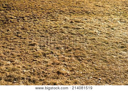 Yellow grass in early spring with mud.