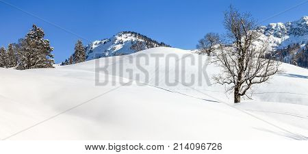 Solitary maple tree in deep snow. Mountains winter landscape on clear sunny day. Allgaeu Alps, Bavaria in Germany.