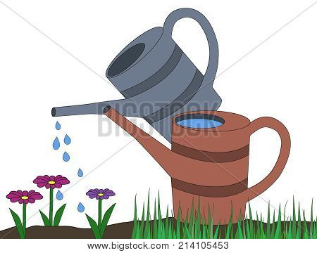 Two Watering Can Gray Orange On Dirt And Grass Watering Drops On Pink Violet Daisy Flower Cartoon Ve
