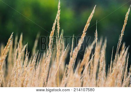 Autumn Landscape Background