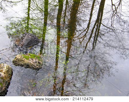 Beautiful reflection of trees in the water.