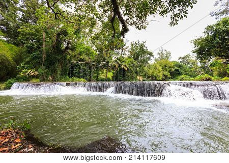 Waterfall And Tree In The Forest