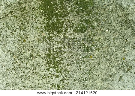 background texture: the surface of an old concrete slab covered with stains of moss or algae