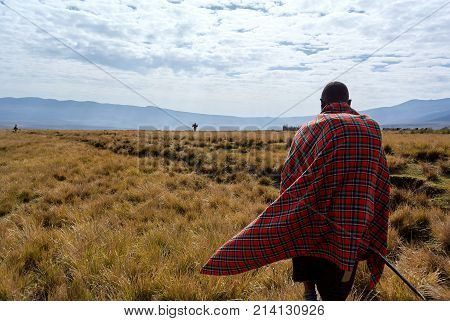 Masai trekking walking in the Ngorongoro conservation area in Tanzania with grss and blue sky