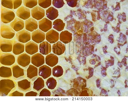 wooden frame with yellow bee honeycombs close up